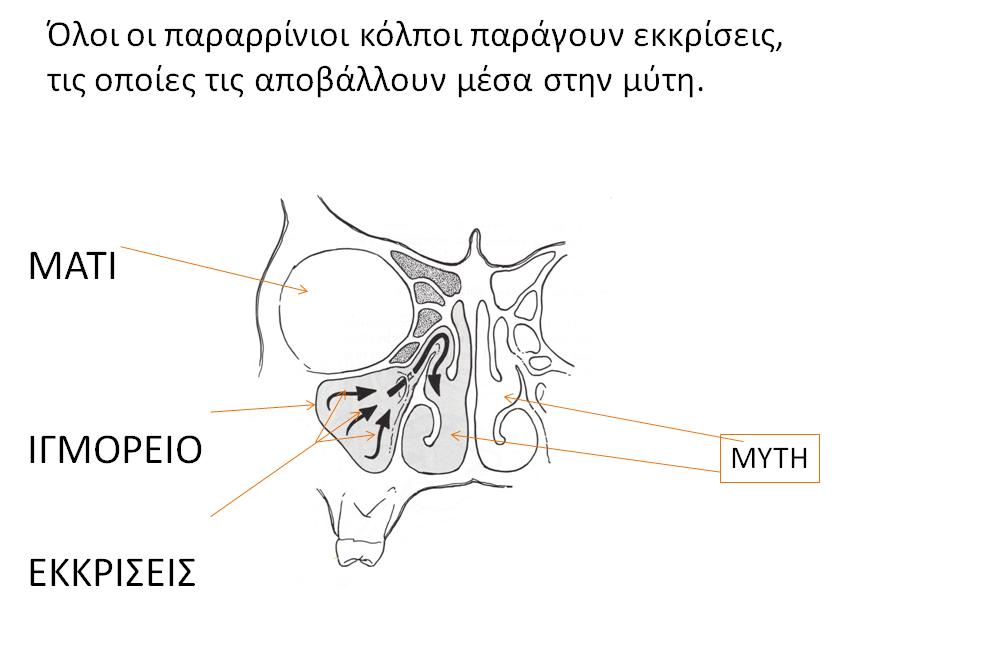 sxima-2