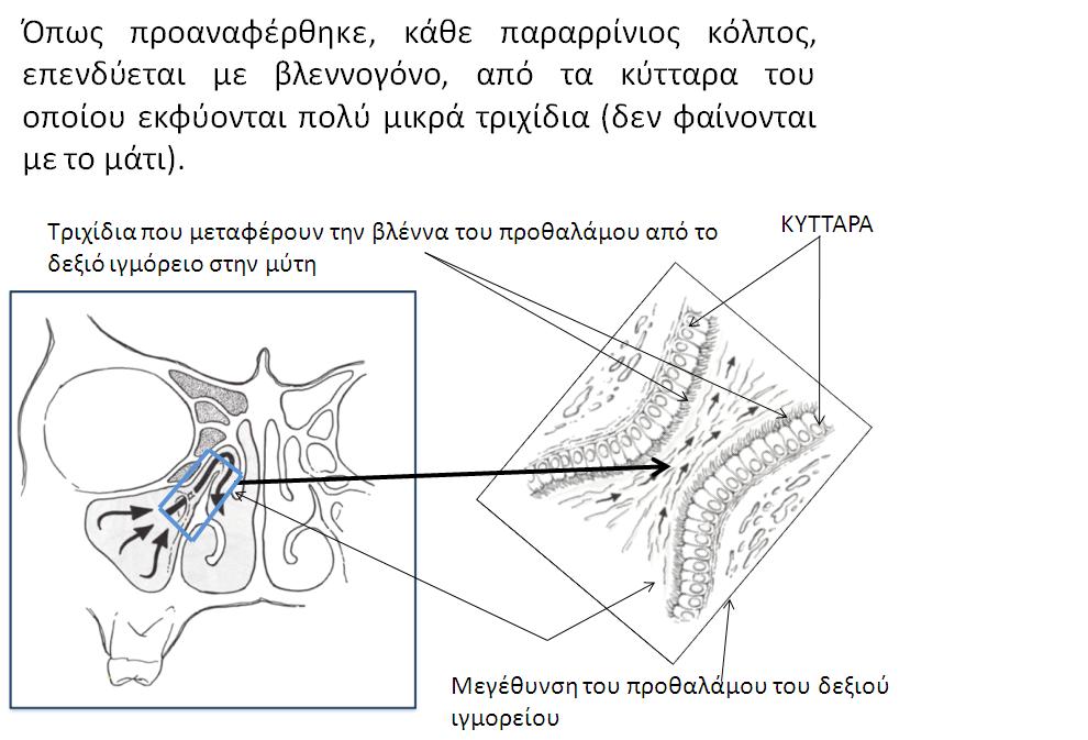 sxima-4